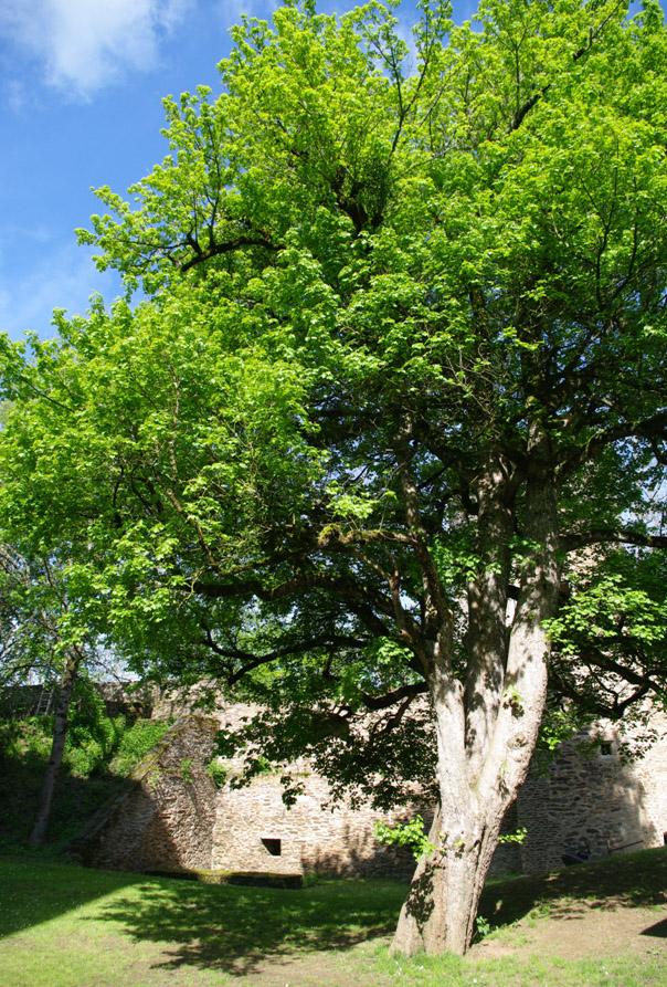 L'arbre de Bunuel